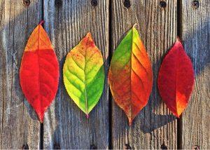 Fall Event Porta Potty Rentals